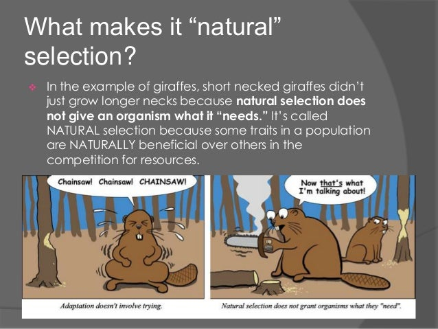 Natural Selection Factors Examples