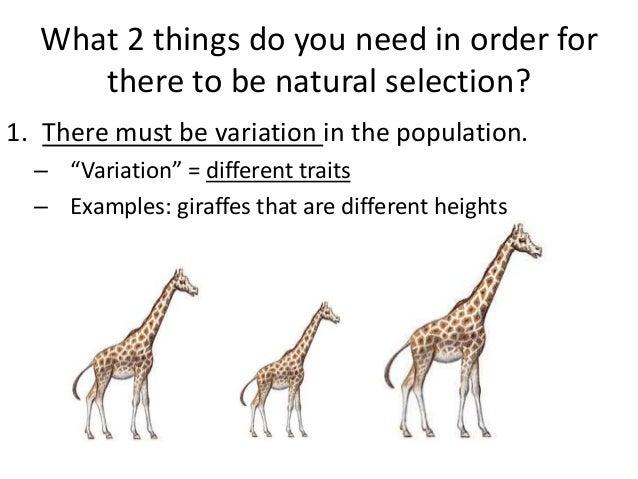 Natural Selection Animal Example