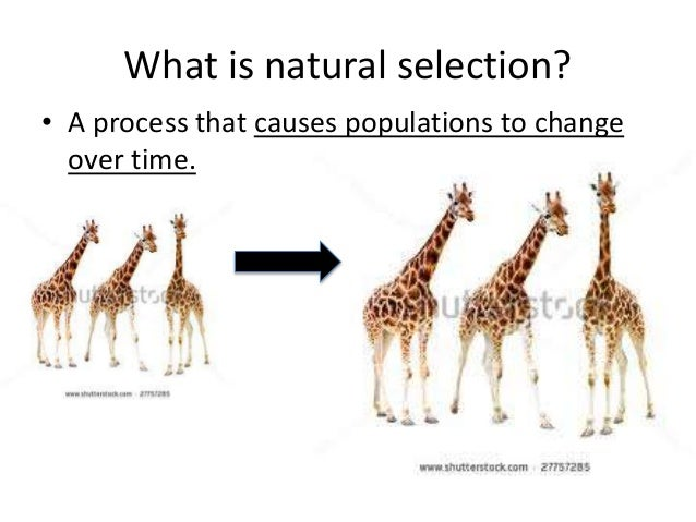 Explain What Is Meant By Natural Selection