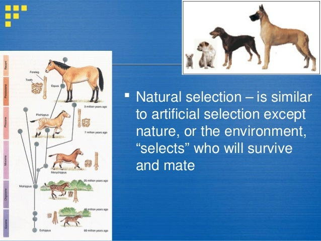an introduction to the analysis of the natural selection Natural selection acts at the level of individuals it is the individual organism that lives or dies, it is the individual organism that lives or dies, reproduces or fails to reproduce because of its characteristics.