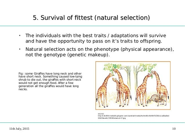 Survival Ofthe Fittest And Natural Selection