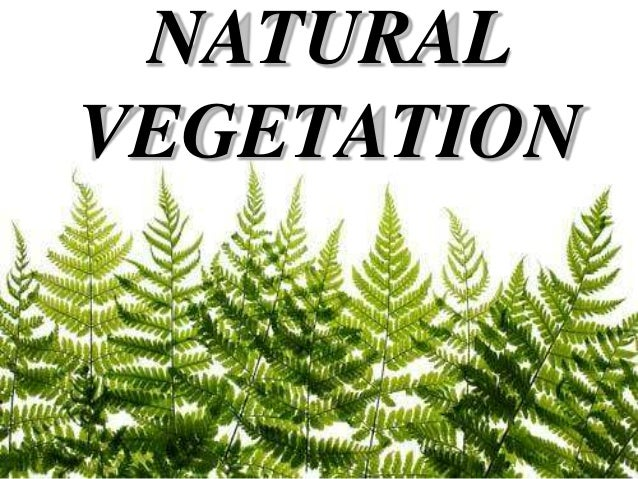 Natural vegetation (By Shaurya Nagpal)