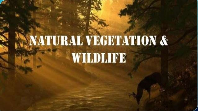 Wildlife and natural vegetation