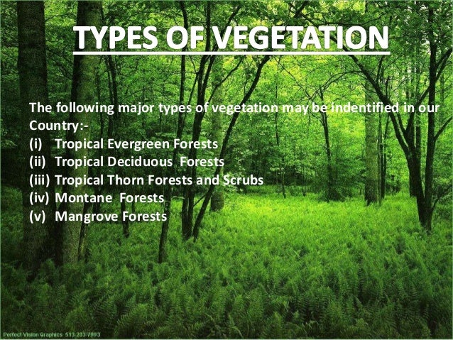 Natural vegetation and wild life