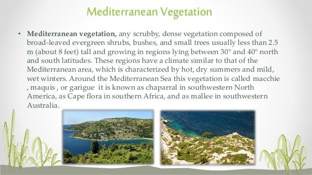 an essay about vegetation typical of a mediterranean climate Chaparral is found in regions with a climate similar to that of the mediterranean chaparral areas that have an average chaparral vegetation.