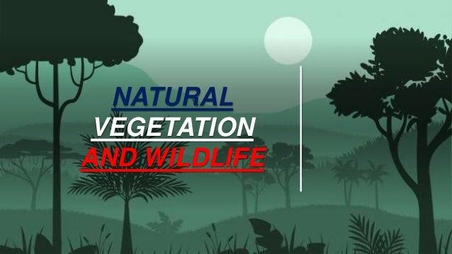 NATURAL VEGETATION AND WILDLIFE