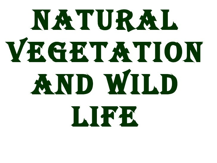asia natural vegetation and wildlife