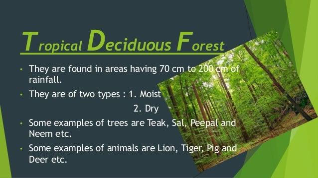 Natural Vegetation And Wildlife Ppt