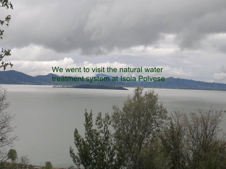 We went to visit the natural watertreatment system at Isola Polvese
