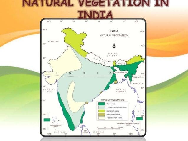 natural vegetation of india