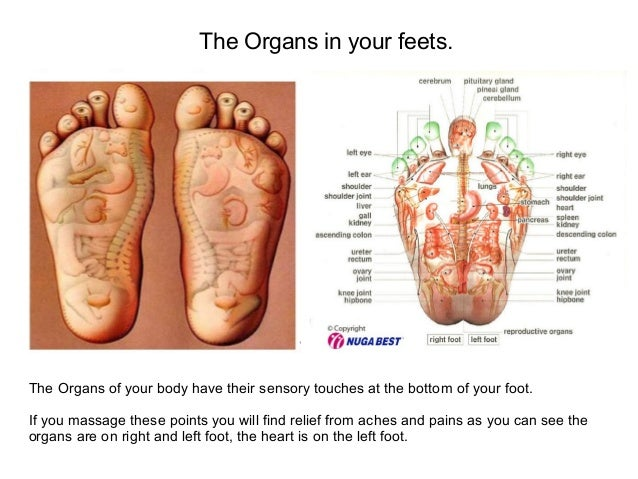 Dorable Anatomy Of The Bottom Of Your Foot Image Collection