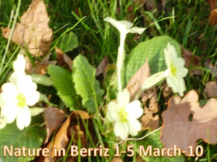 Nature In Berriz