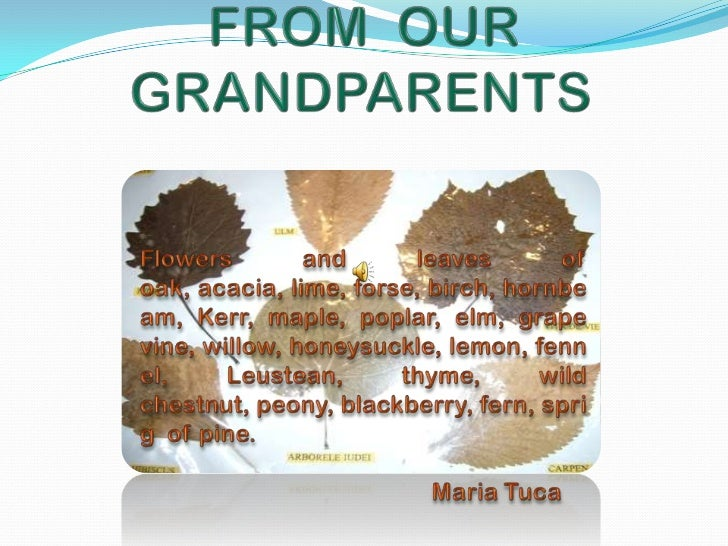 FROM  OUR GRANDPARENTS <br />Flowers and leaves of oak, acacia, lime, forse, birch, hornbeam, Kerr, maple, poplar, elm, gr...