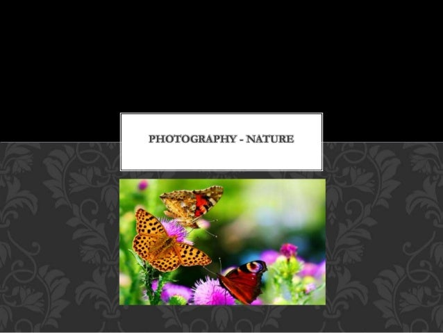 PHOTOGRAPHY - NATURE