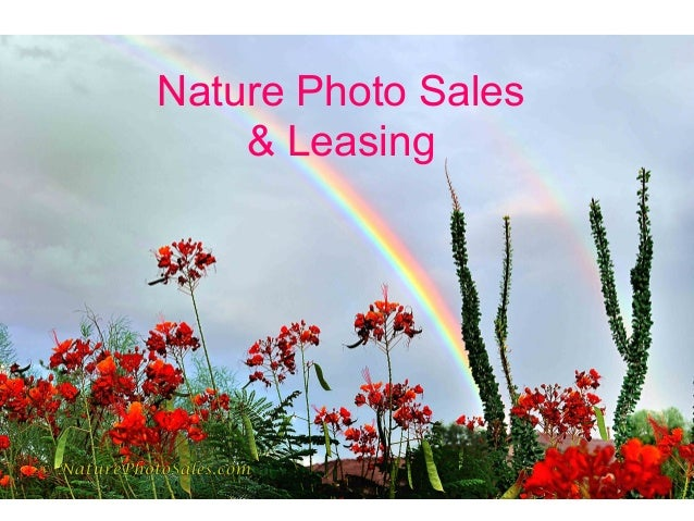 Nature Photo Sales & Leasing