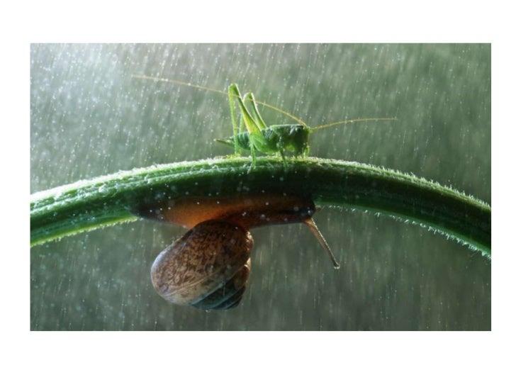 Nature plus captions