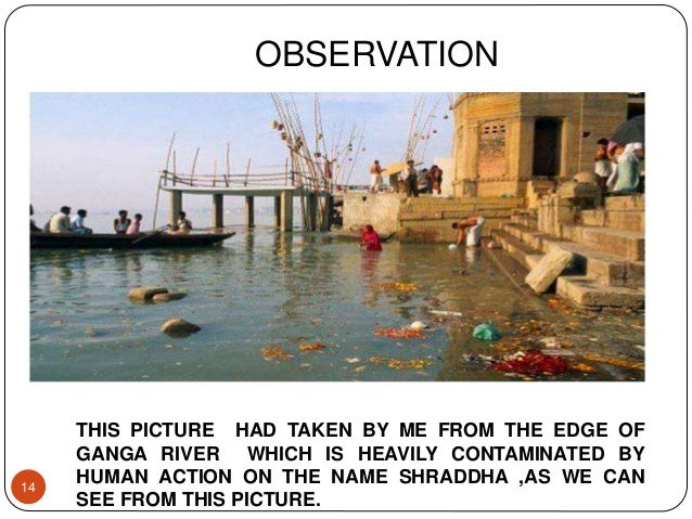 14 OBSERVATION THIS PICTURE HAD TAKEN BY ME FROM THE EDGE OF GANGA RIVER WHICH IS HEAVILY CONTAMINATED BY HUMAN ACTION ON ...