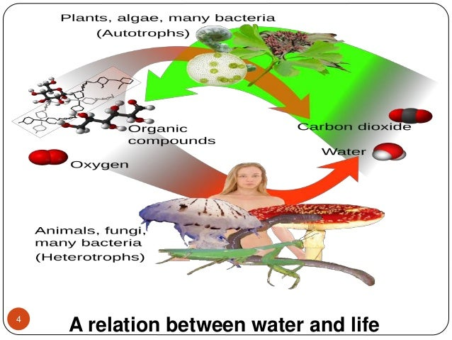 A relation between water and life4