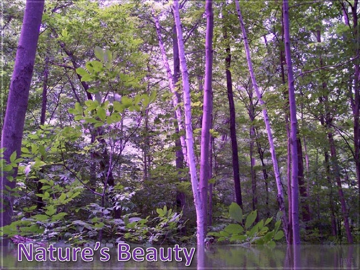 Nature's Beauty<br />