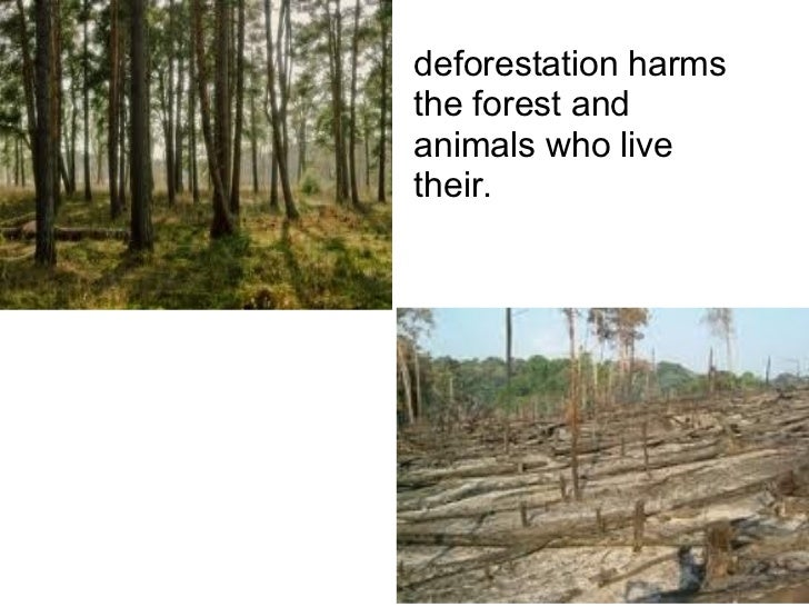 deforestation harms the forest and animals who live their.