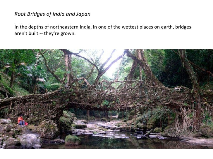 Root Bridges of India and Japan In the depths of northeastern India, in one of the wettest places on earth, bridges aren't...