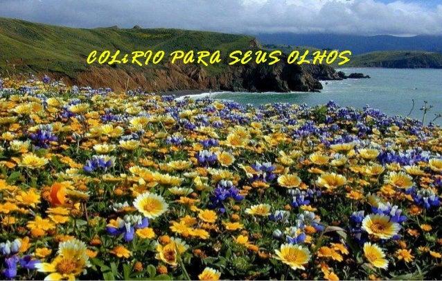 COLíRIO PARA SEUS OLHOS