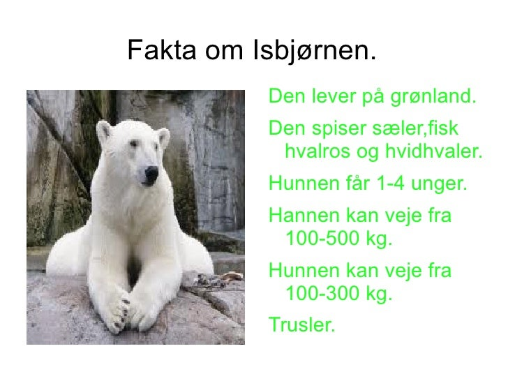 fakta om isbjørn