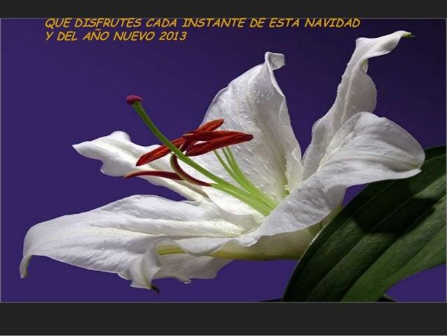 QUE DISFRUTES CADA INSTANTE DE ESTA NAVIDADY DEL AÑO NUEVO 2013