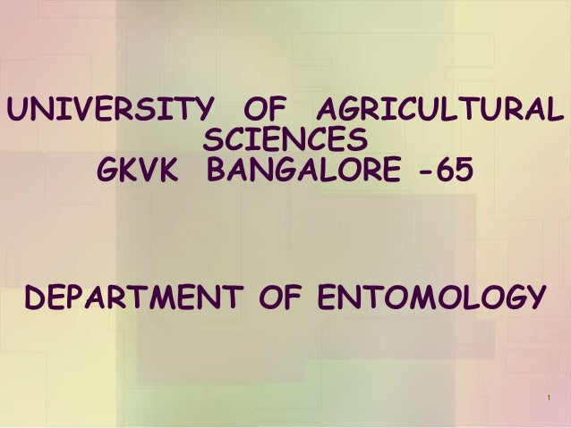 UNIVERSITY OF AGRICULTURAL SCIENCES GKVK BANGALORE -65 DEPARTMENT OF ENTOMOLOGY 1