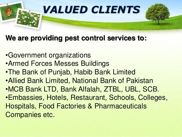 Nayab pest control company presentations - National bank of pakistan head office ...