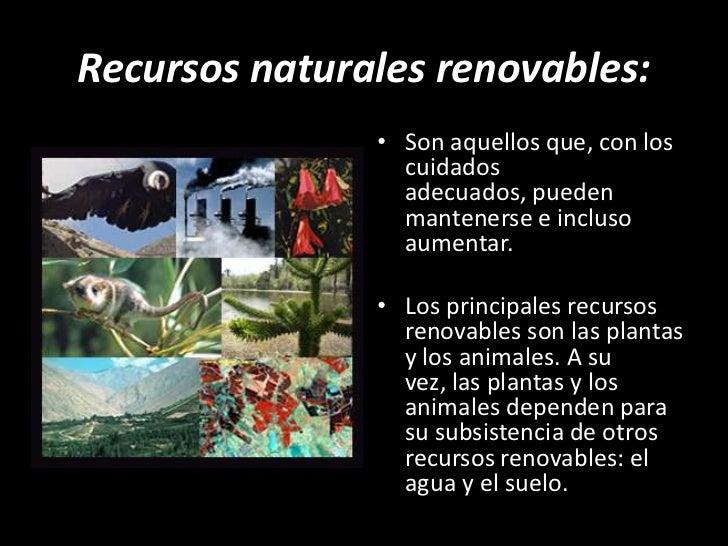 Nb5 u2 recursos for Animales de plastico para jardin