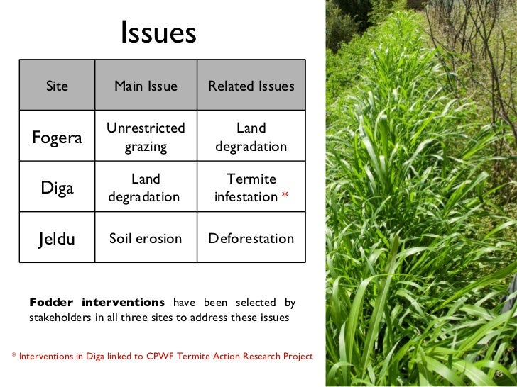 IP Fodder interventions to complement SLM campaign
