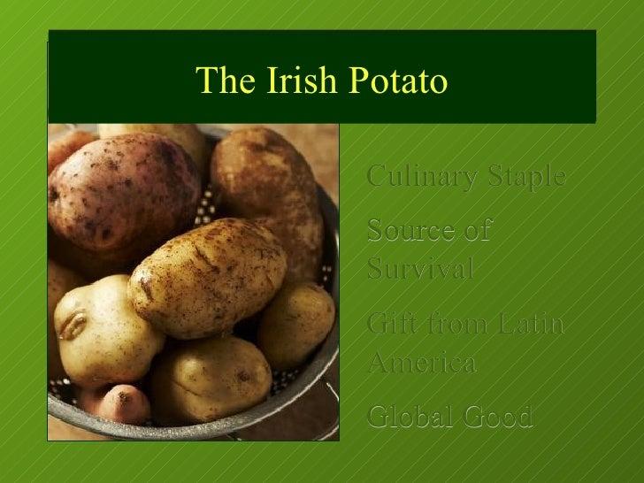 Culinary Staple Source of Survival Gift from Latin America Global Good The Irish Potato