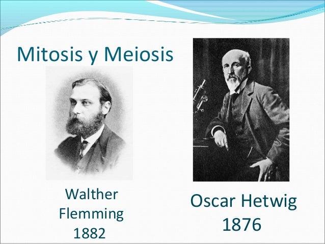 •Meiosis