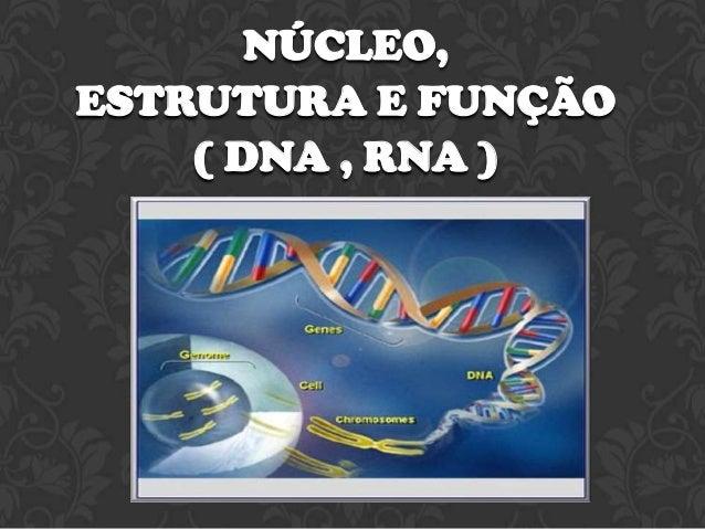 NÚCLEO, ESTRUTURA E FUNÇÃO ( DNA , RNA )