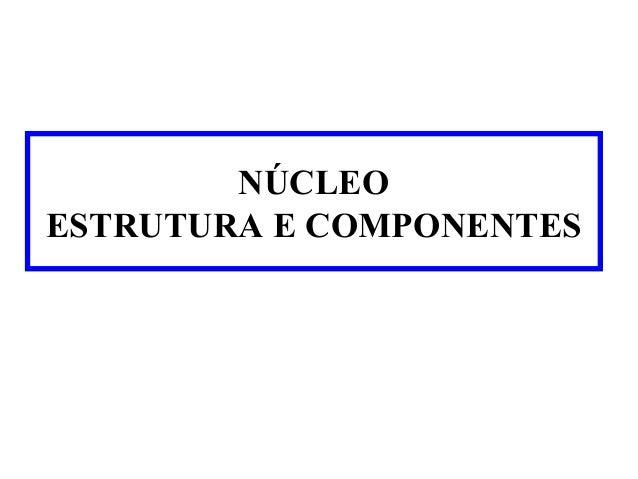 NÚCLEO ESTRUTURA E COMPONENTES