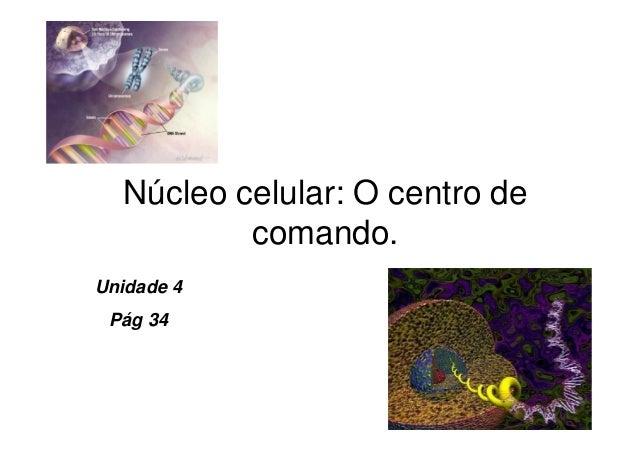 Núcleo celular: O centro de comando. Unidade 4 Pág 34