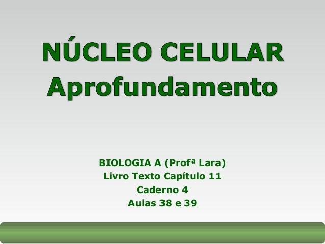 BIOLOGIA A (Profª Lara) Livro Texto Capítulo 11 Caderno 4 Aulas 38 e 39