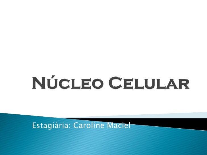 Estagiária: Caroline Maciel