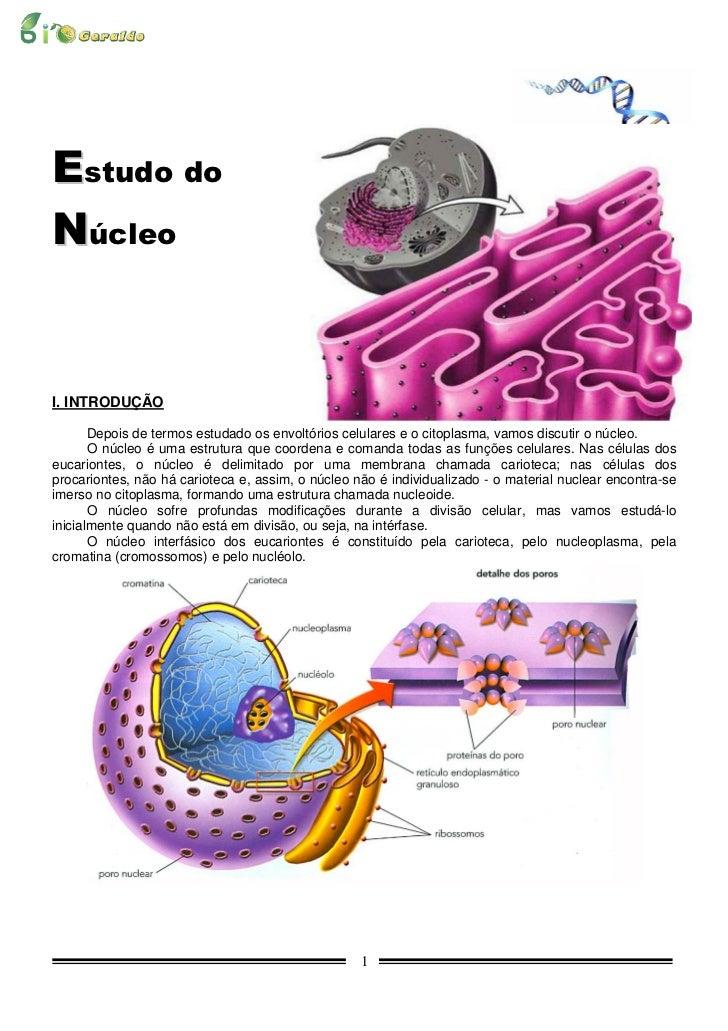 Estudo doNúcleoI. INTRODUÇÃO       Depois de termos estudado os envoltórios celulares e o citoplasma, vamos discutir o núc...