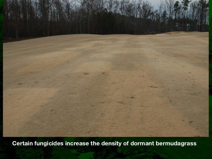 ncstma-diseases-of-bermudagrass-31-728.jpg?cb=1299661848