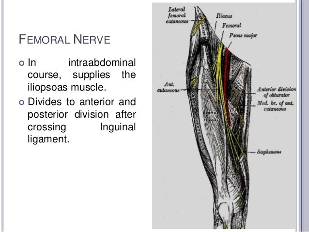 nerve conduction studies- lower leg, Muscles