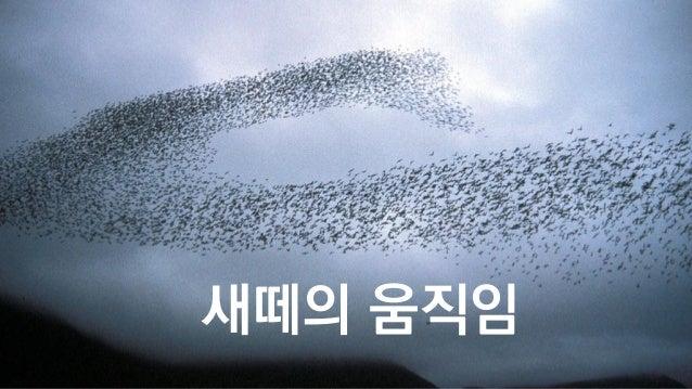 새떼의 움직임