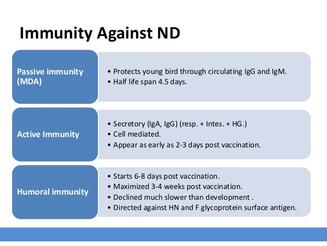 Immunity Against ND • Protects young bird through circulating IgG and IgM. • Half life span 4.5 days. Passive immunity (MD...