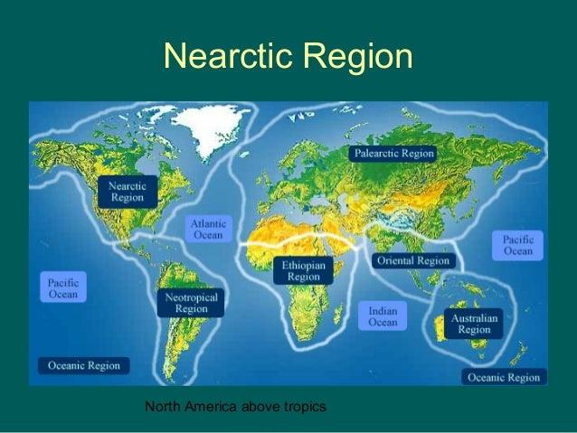 Nearctic Region  North America above tropics