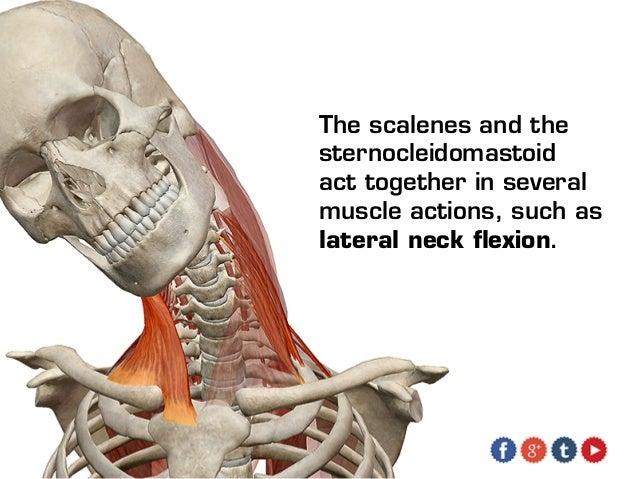 Shoulder anatomy nerves