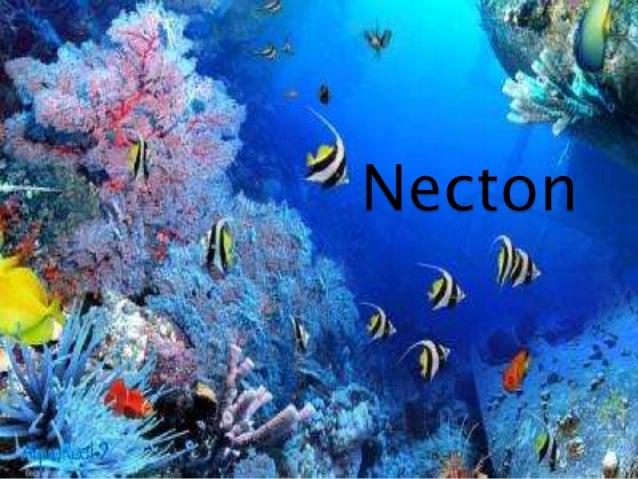  Animales nadadores.  Habitan en la zona pelágica  dotados de una anatomía particular (formas hidrodinamicas,psicoforme...