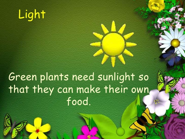 Lightu003cbr /u003eGreen Plants Need ...