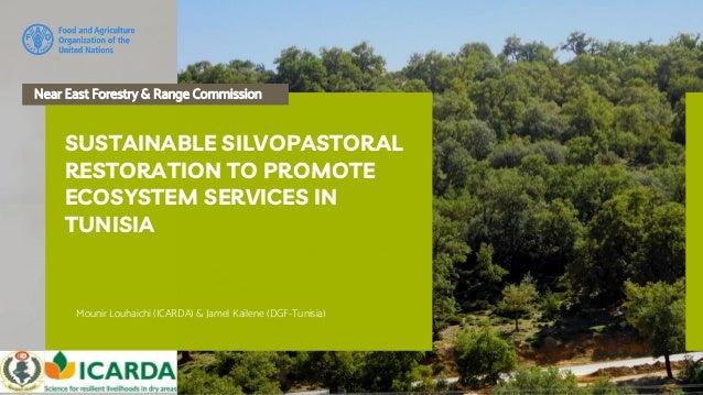 Near East Forestry and Range Commission Mounir Louhaichi (ICARDA) & Jamel Kailene (DGF-Tunisia) SUSTAINABLE SILVOPASTORAL ...