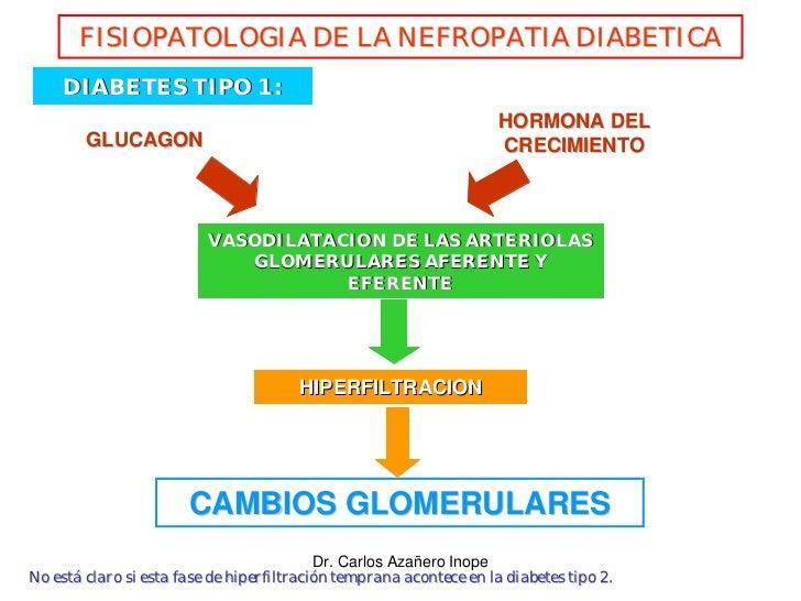 FISIOPATOLOGIA DE LA NEFROPATIA DIABETICA      DIABETES TIPO 1 :                                                          ...